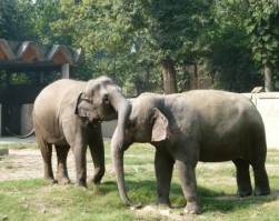 Educational Day Out Trip (Alipore zoo)
